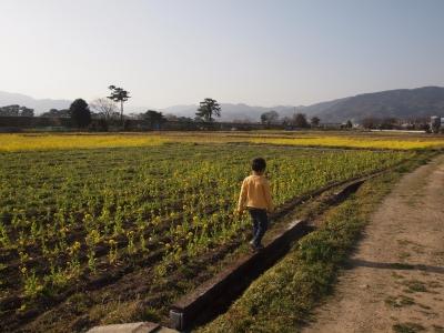 大井町の菜の花畑へ