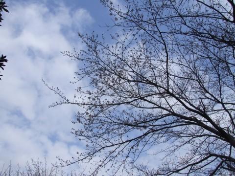桜が咲いたよ〜