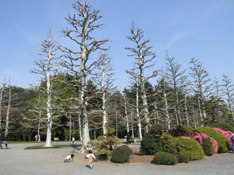 プラタナス並木へ