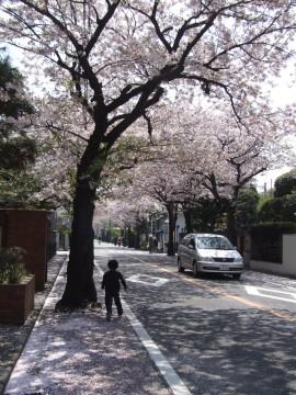 桜並木を通って